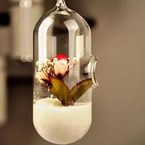 Гидропоника растений форма цветка таблетки висит стеклянной вазе домашнего декора, фото 3