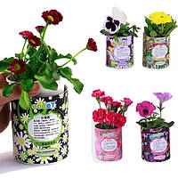 DIY мини лаки зодиака цветочный горшечных растений офисный настольный декор