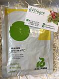 Семена капусты Анкома (Ancoma RZ) F1, 2500 семян (калиброванные), фото 2