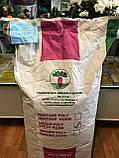 Насіння кормового буряка Урсус Полі / Ursus Рoli, 20 кг, фото 4