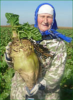 Семена кормовой свеклы Центаур Поли / Тsentaur Рoli, 1 кг