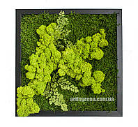 """Картина из стабилизированного мха и растений """"Свежесть леса 2"""", P14"""