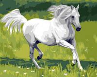 """Картина по номерам """"Белый конь"""" G369  (40*50 см)"""