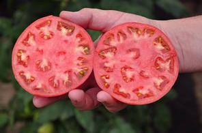"""Семена томата Хани Мун F1 (Clause) 250 семян — ранний (65 дней), розовый, форма """"круглый"""", индетерминантный., фото 3"""