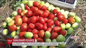 Семена томата Пьетра росса F1 (Clause) 5000 сем — средний (115 дней), красный, детерминантный, овальный, фото 2