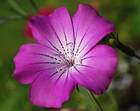 Агростемма Милас, семена 0,5 г