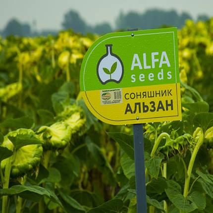 Семена подсолнечника Альзан, вегетация 101 день , фото 2