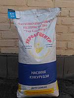 Кукуруза сорт Солонянский