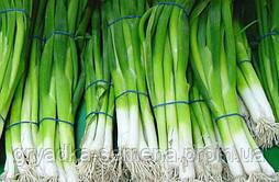 Лук на перо Кими F1 Сora Seeds 10 000 семян Италия