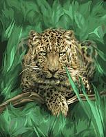 """Картина по номерам """"Гепард в зелени"""" gx7798 (40*50 см)"""