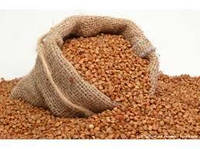 Семена гречихи Арно (Канада/ 1-репродукция)