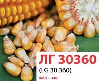 Семена кукурузы ЛГ30360, Лимагрейн (LG30360)