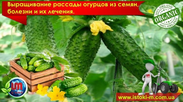 грунт для рассады огурцов_удобрение для рассады огурцов_подкормка рассады огурцов