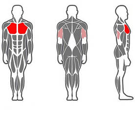 Хаммер для грудных мышц (жим горизонтальный), фото 3