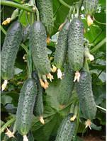 Огурец самопыляемый Каприкорн Ф1 500 семян, турция