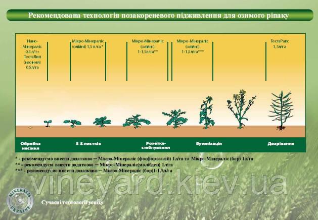 Предприятие Минералис Украина, озимый рапс, масляные, схема питания, фаза развития, нормы внесения, микроудобрения, Нано-Минералис, ТестаРапс