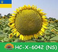 Гибрид подсолнечника НС-Х-6042 (NS)
