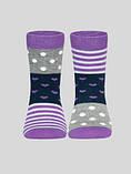 Носки детские TIP-TOP (весёлые ножки)  17С-10СП, р.18, 282 , хлопок 72%, фото 2