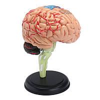 4D Демонтированная анатомическая модель мозга человека Анатомия Медицинская Преподавание Инструмент