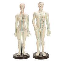 Модель человеческого тела для акупунктуры Мужская женская модель меридианов Модельная база 48/50 см