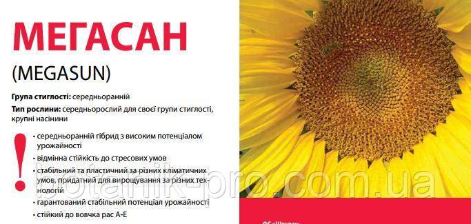Семена подсолнечника Limagrain Мегасан
