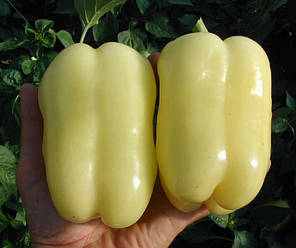 Семена перца Никита F1 (Clause/Агропак+) 50 семян — ранний (70 дней), кубовидный, красный, сладкий, фото 2