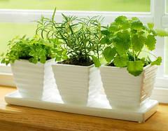 Балконные семена, микрозелень (микрогрин)