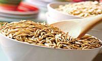 Пищевые волокна – здоровье круглый год