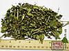 Кирказон трава 50 гр