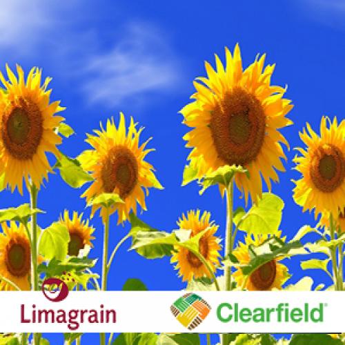 Гибрид подсолнечника LG50635 Clearfield ® Plus Limagrain