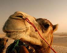 Туры в Тунис. Отличные цены на отдых в Тунисе