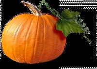 Професійні насіння гарбуза і патисона в банках