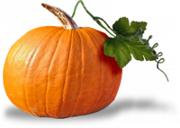 Профессиональные семена тыквы и патиссона в банках