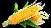Профессиональные семена кукурузы в банках