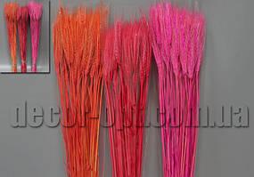Колоски цветные натур. 60-65см/90шт