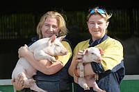 Как влияет стоимость премикса PIG на стоимость готового корма