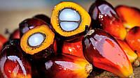 Стеарин пальмовый рафинированный дезодорированный отбеленный
