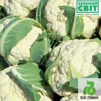 Семена капусты Сантамария F1 (Rijk Zwaan / САДИБА ЦЕНТР) 10 сем - середнераняя (80 дней), всесезонная, цветная