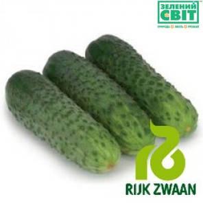 Семена огурца Караоке F1 (Rijk Zwaan) 1000 семян — партенокарпик, ранний гибрид (45 дней), фото 2