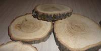 Срез дерева. Дуб 13 - 14 см, фото 1