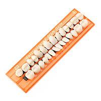 Зубной Акриловые смоляные зубы 28 единиц Зубной протез Устные полости науки Стоматолог Студенческая практика Инструмент