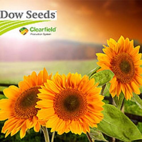 Гибрид подсолнечника 8Н421КЛДМ Dow Seeds