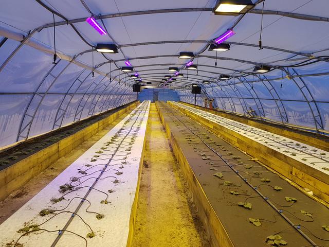 пленка прозрачная для фермерских теплиц
