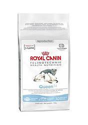 Royal Canin (Роял Канин) Queen Сухой корм для беременных и кормящих кошек, 4 кг