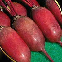 Семена Свеклы Просто Клад, (Россия), 0,25кг