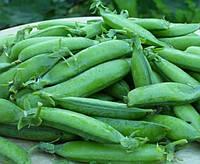 Семена Гороха Альфа сахарный, (Россия), 0,5кг