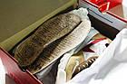 Мужские кроссовки Nike Tom Sachs Craft Mars Yard 2.0 (в стиле Найк), фото 2