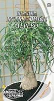 Семена нолины Бутылочное дерево 4шт Семена Украины