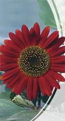 Семена подсолнечника декоративного Красное солнышко 1,5 г Семена Украины