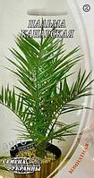 Семена пальмы канарской 2г (2шт) Семена Украины